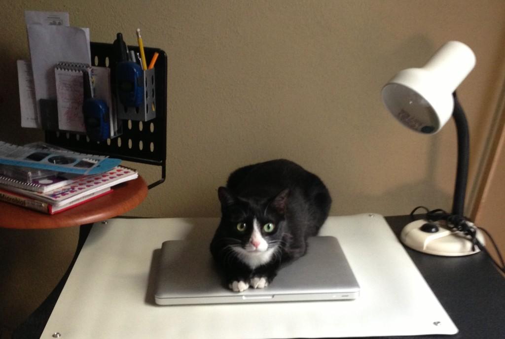 Quesadilla on her laptop