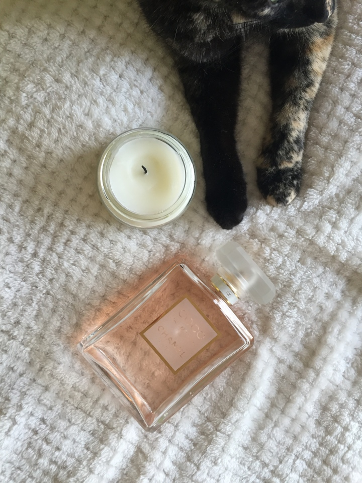 Kitty loves scents