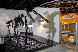 Museo de Paleontología de Guadalajara